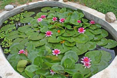 how-to-install-a-water-garden-pond-17