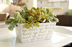 Succulent Garden Hostess Gift