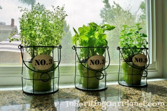Growing Your Own Herbs Indoors