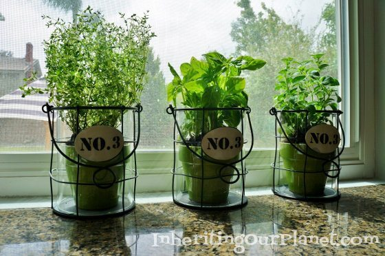 Kitchen Herb Garden Diy Inspired