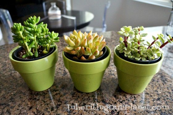 Upcycled Thrift Store Succulent Pot Diy Inspired