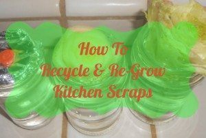 How-To-Recycle-and-Regrow-Kitchen-Scraps-650x437