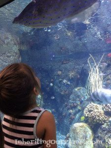 Plastic-Recycling-Facts-I-Learned-While-Visiting-the-Aquarium-