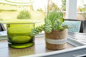 Repurposed Yoghurt Container Succulent Pot