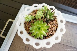 http://www.diyinspired.com/wp-content/uploads/2015/06/Succulent-Centerpiece-for-Patio-300x199.jpg