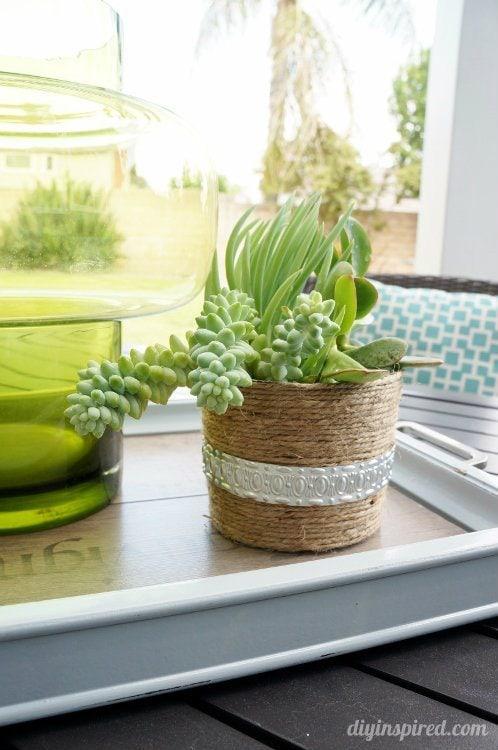Succulent Plants for Patio Table