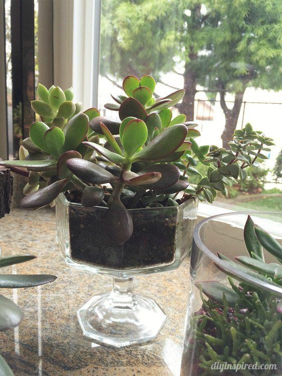 planting succulent cuttings diy inspired. Black Bedroom Furniture Sets. Home Design Ideas
