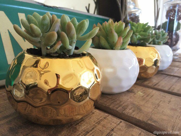 Mini Succulents in a Vase