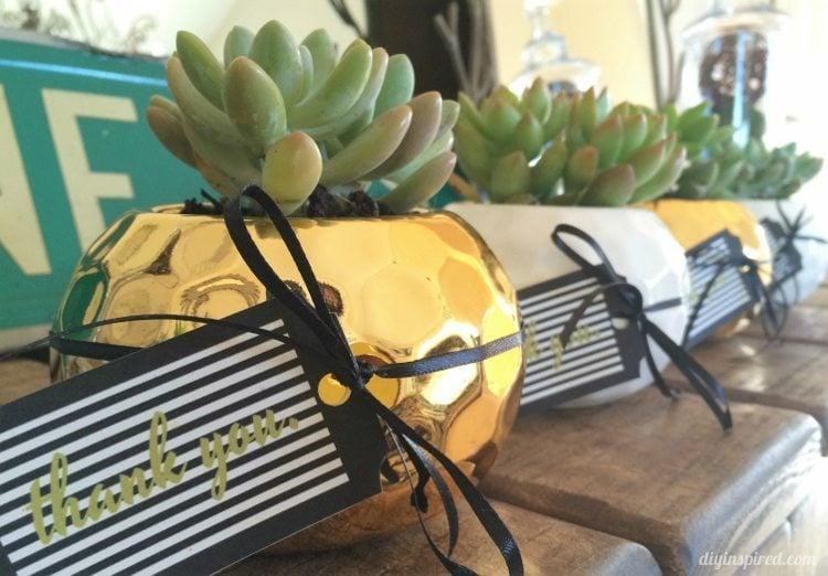 Succulent Thank You Gift Idea
