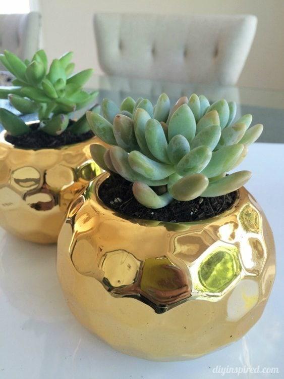 Succulents in Gold Vase
