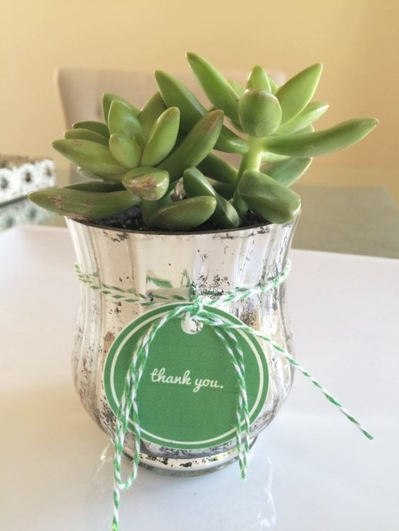 Succulent Gift With Thank You Printable Diy Inspired