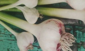 http://www.diyinspired.com/wp-content/uploads/2016/06/Grow-Your-Own-Garlic-300x180.jpg