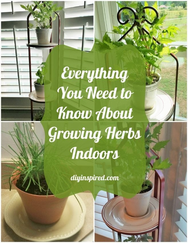 Everything You Need to Know About Growing Herbs Indoors - DIY Inspired