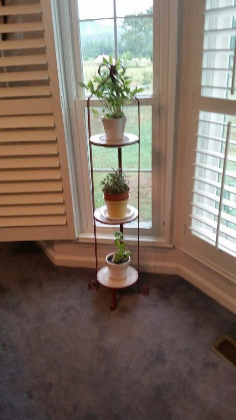 Growing Herbs Indoors (2)