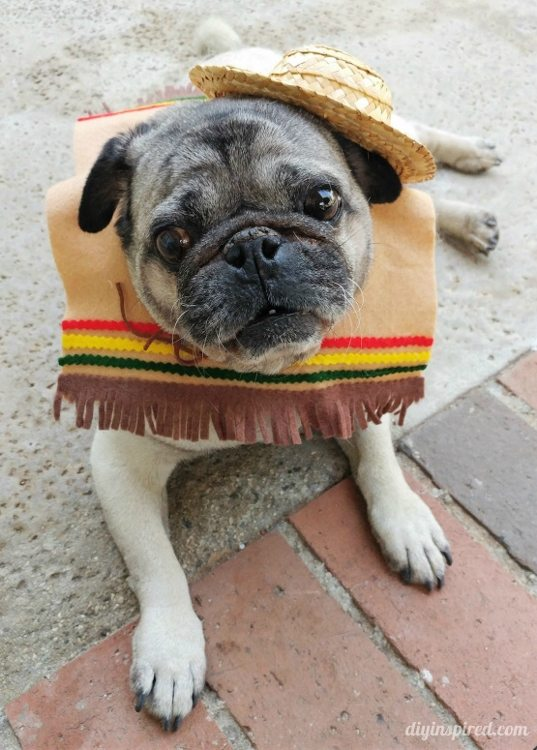 DIY Dog Halloween Costume - DIY Inspired