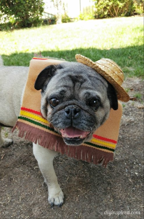 DIY Halloween Costume for Dogs - DIY Inspired