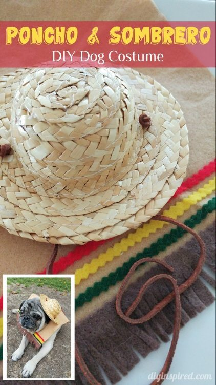 DIY Poncho and Sombrero Halloween Costume for Dogs - DIY Inspired