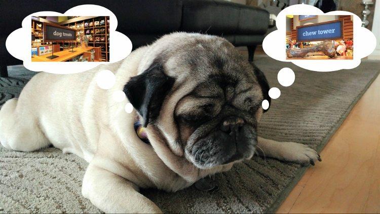dog-dreams-come-true